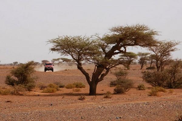 africa-race-recos-maroc-deux