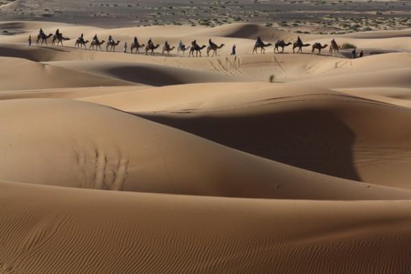 Dans les dunes de MERZOUGA, une caravane de chameaux - Photo Alain ROSSIGNOL
