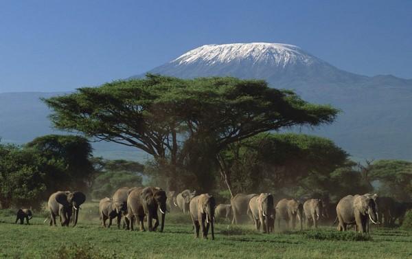 SAFARI-KENYA-CLASSIC-2013-La-reserve-d-AMBOSELLI-avec-dans-le-fond-le-fameux-KILIMANDJARO