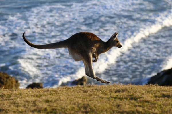 WRC-2014-AUSTRALIE-Attention-pour-la-suite-a-ce-dangereux-car-tres-rapide-concurrent