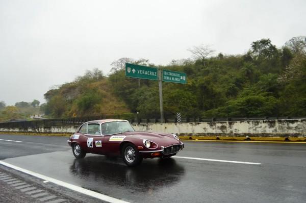 EL-GOLFO-2015-Une-belle-Jaguar-s-éloignant-de-Veracruz-sous-une-petite-pluie-fin.