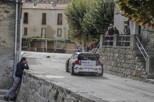 WRC 2015 TOUR DE CORSE VW de SEB OGIER.