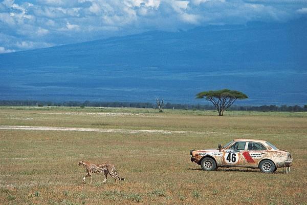 SAFARI-KENYA-2015-Le-spectacle-est-quotidien