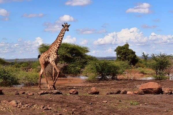 SAFARI-KENYA-2015-PAYSAGE-pendant-la-course-qui-traverse-les-reserves-au-coeur-des-parcs-animaliers
