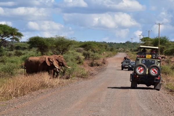 SAFARI-KENYA-CLASSIC-2015-au-coeur-de-la-superbe-réserve-du-parc-animalier-dAMBOSELLI