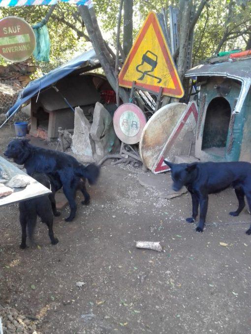 Quelques-uns-des-chiens-de-GERARD-GOMBERT-a-lHACIENDA-à-FAYENCE-Photo-AUTONEWSINFO.